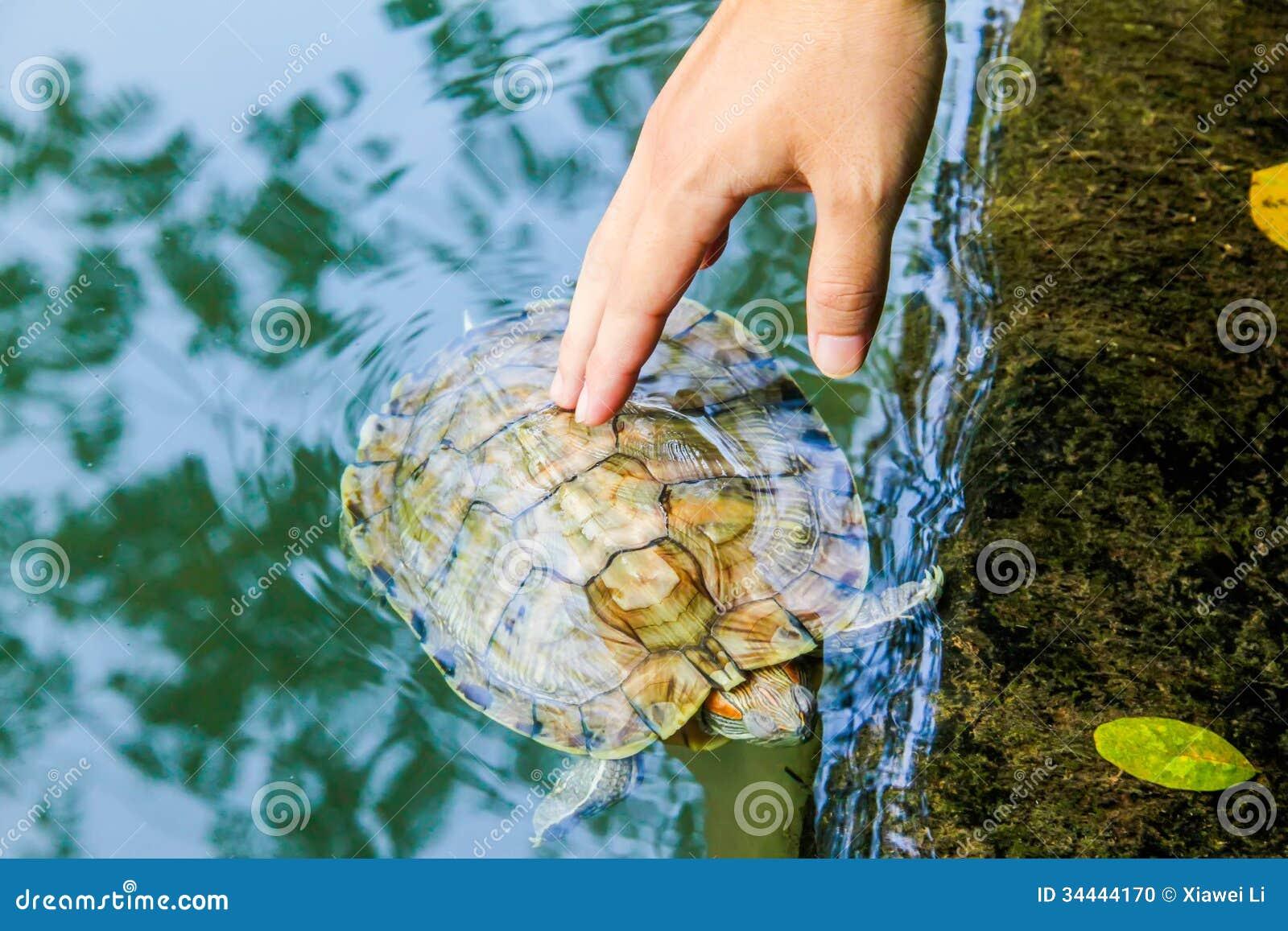 Dotyka tortoise