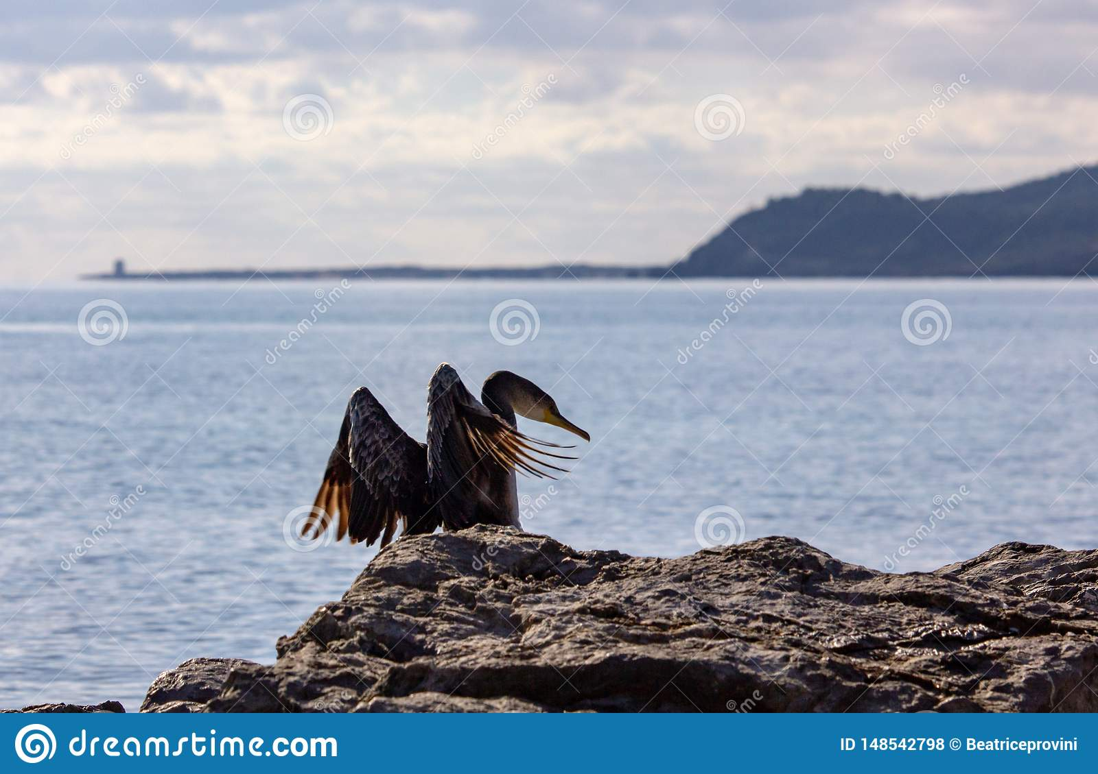 Double-crested Cormorant flying on mediterranean sea