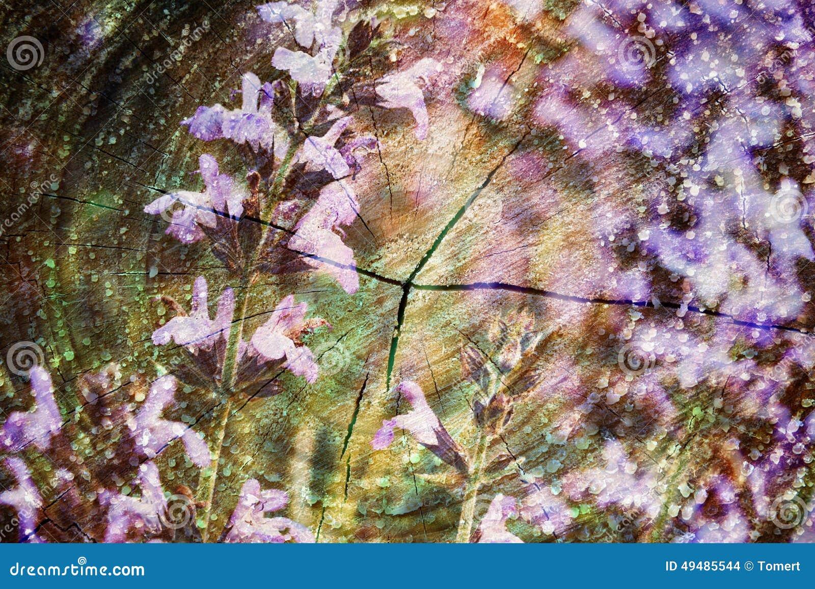Double exposition des fleurs pourpres et du tronc d 39 arbre coup fond de nature photo stock - Tronc d arbre coupe ...
