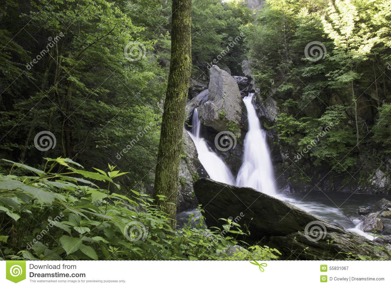 Double Forest Waterfall in Summer