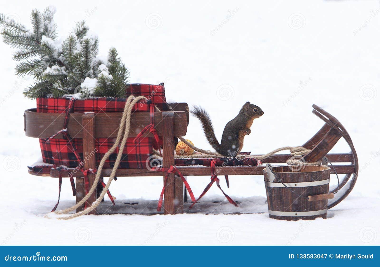 Douglas Squirrel on Christmas Sleigh 2