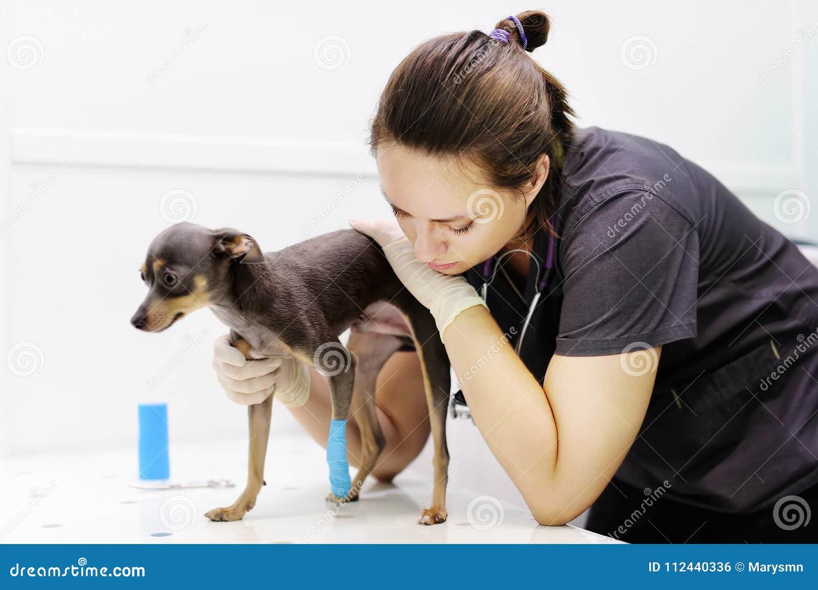 Doutor veterinário fêmea durante o exame na clínica veterinária