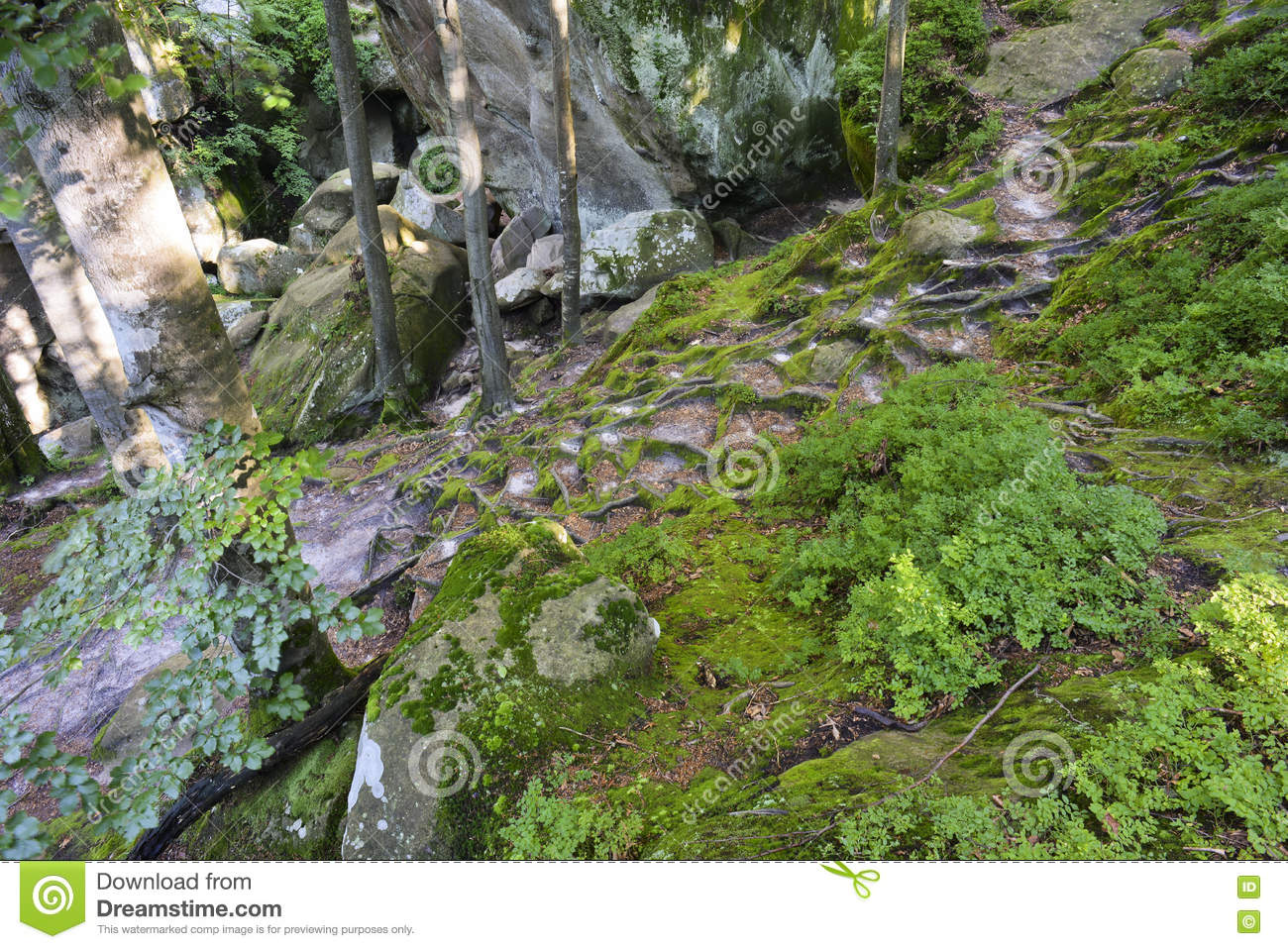 Dovbush Rocks, huge stones, rocks, moss, roots in the moss, trees among the rocks,moss, object, nature, tree, forest, rock