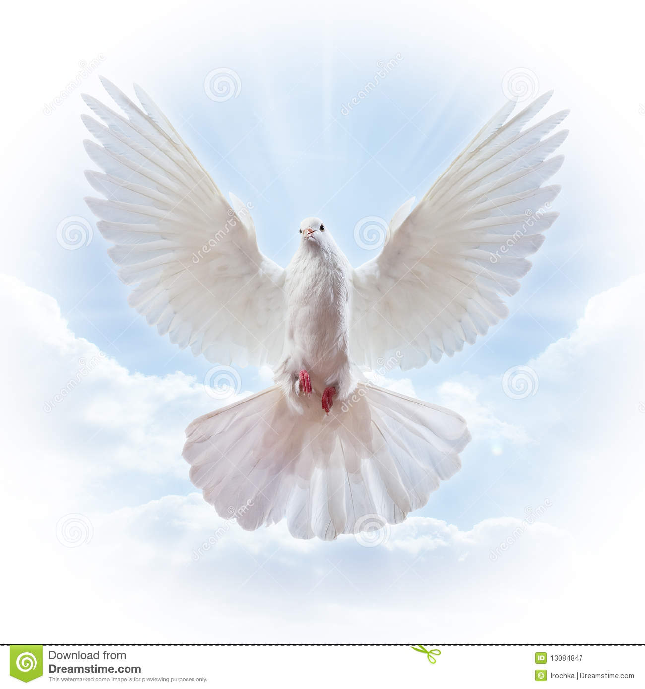 Dove In The Air With Wings Wide Open Royalty Free Stock