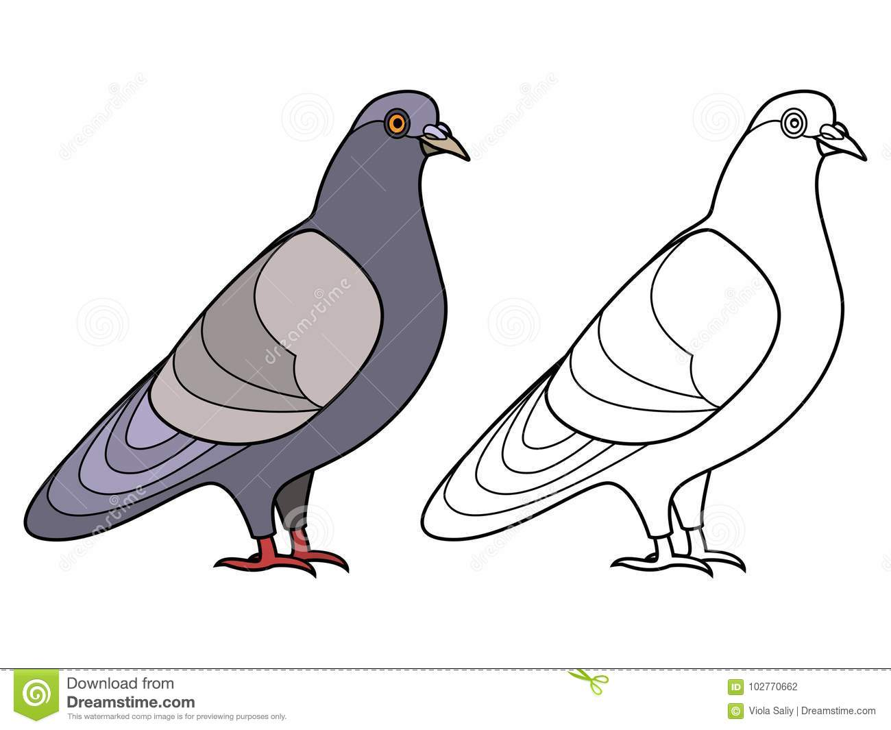 dove contour coloring pages pigeon outline cute handsome
