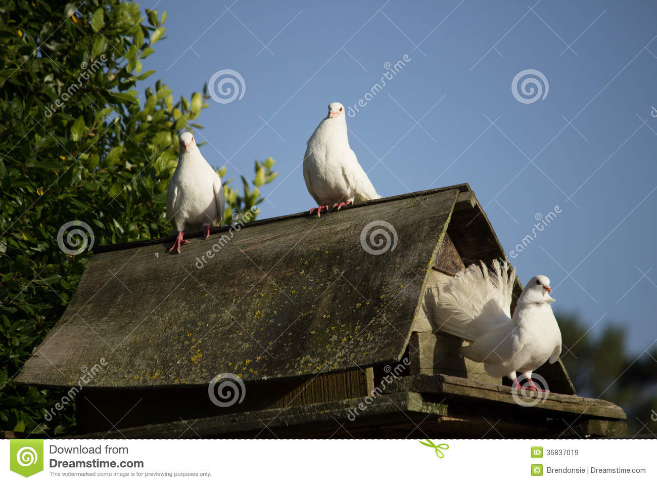 Dove house royalty free stock images image 36837019 for Dove bird house