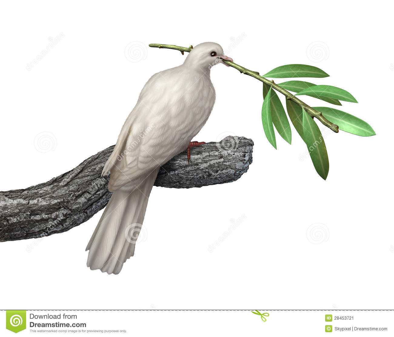 Dove holding an olive branch isolated on a white background as a ...