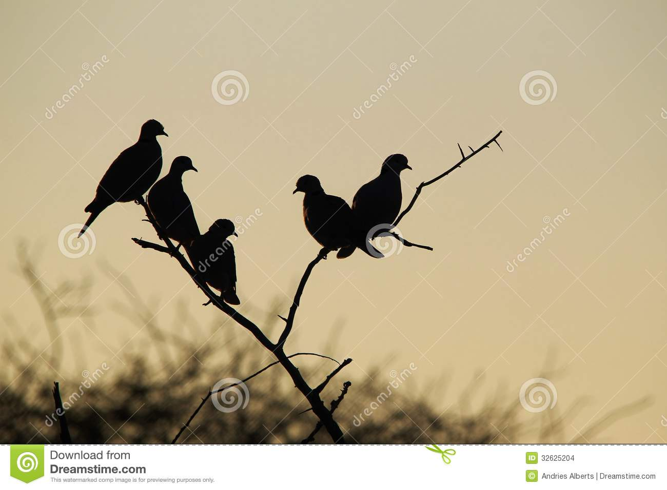 Dove Silhouette - Background Beauty - African wild birds