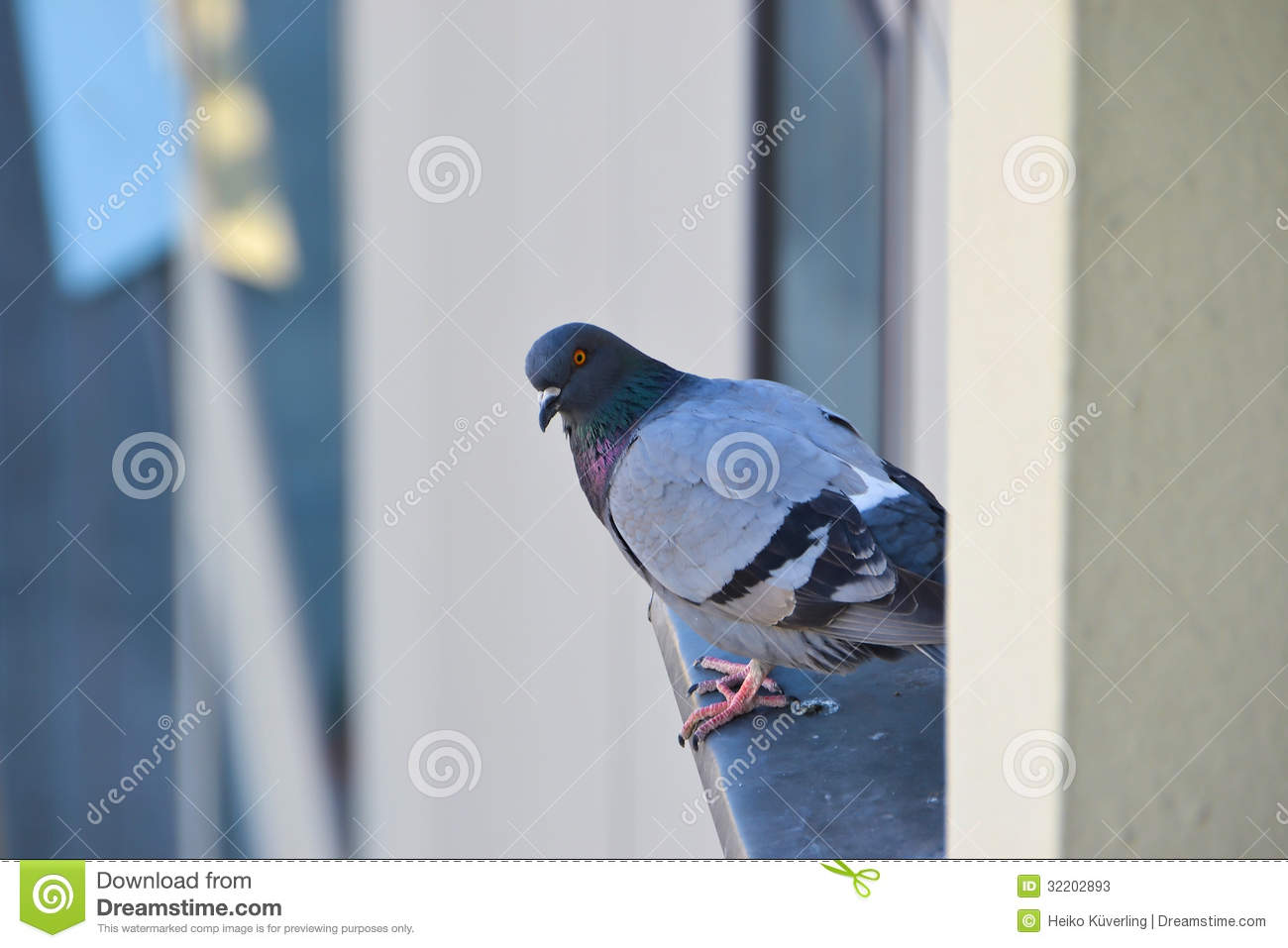 A dove sitting on a window sill stock photos image 32202893 for 2 little birds sat on my window
