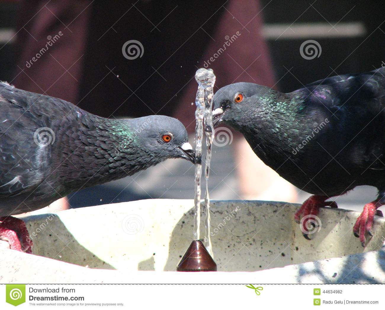 Doves Of Peace Stock Photo