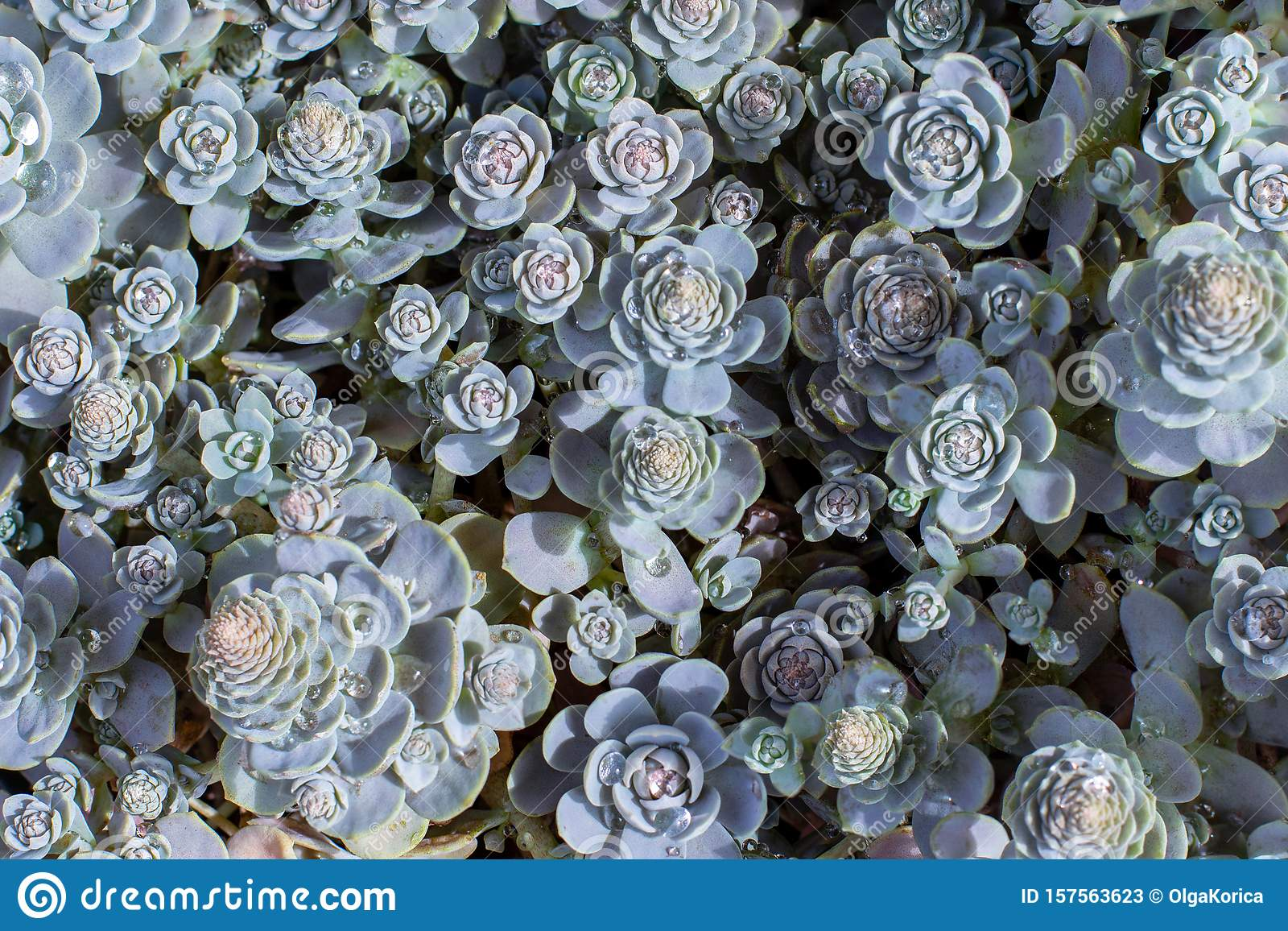 10 560 Succulent Wallpaper Photos Free Royalty Free Stock Photos From Dreamstime