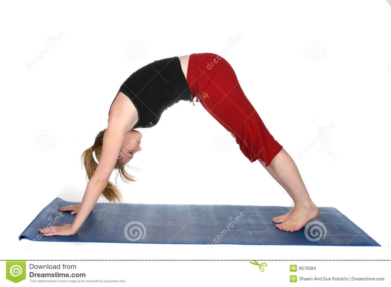 Downward Facing Dog Yoga Position Stock Images Image