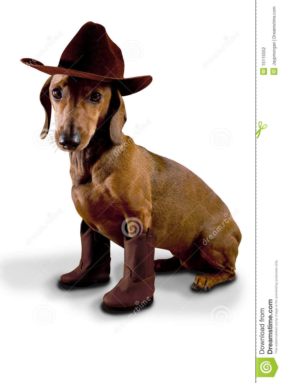 Doxie Dog Wearing Cowboy Hat And Boots Stock Photography