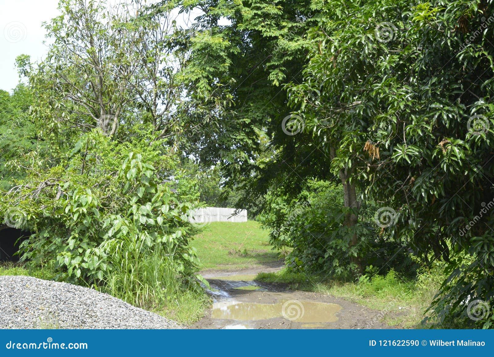 Dozownik droga wiodący outside PENRO-LGU
