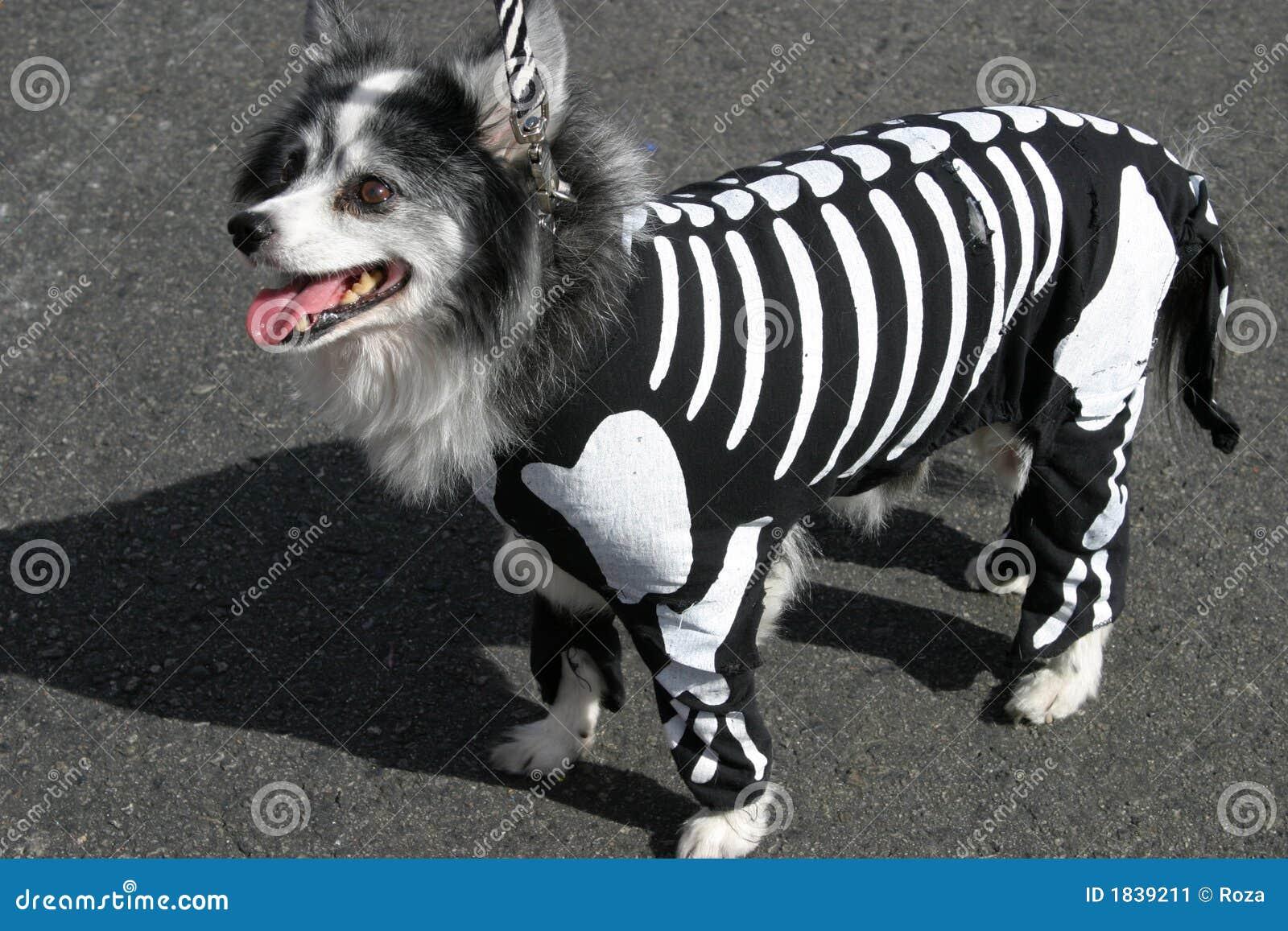 Dräkthundskelett
