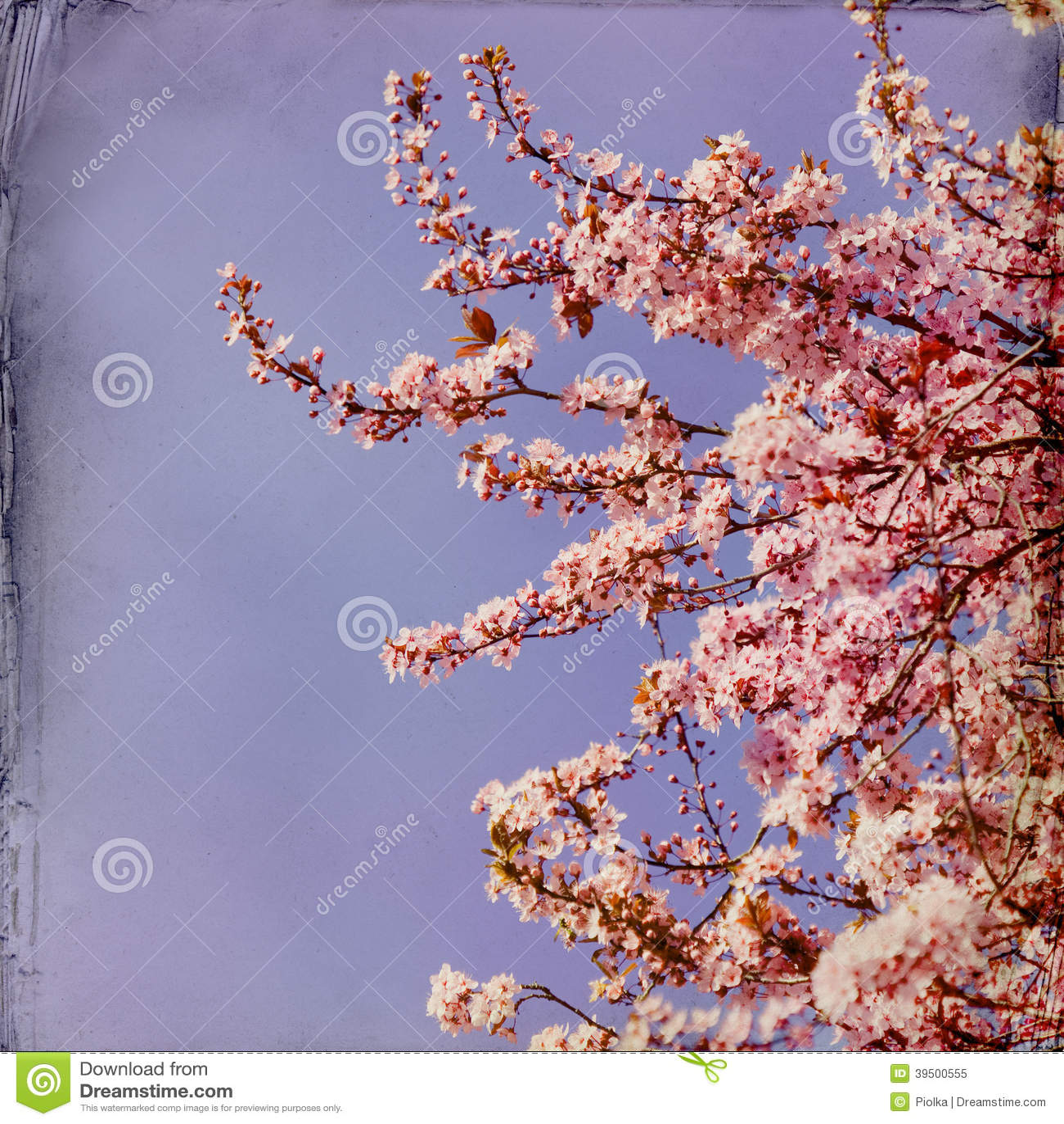 Drömlik springflowersbakgrund