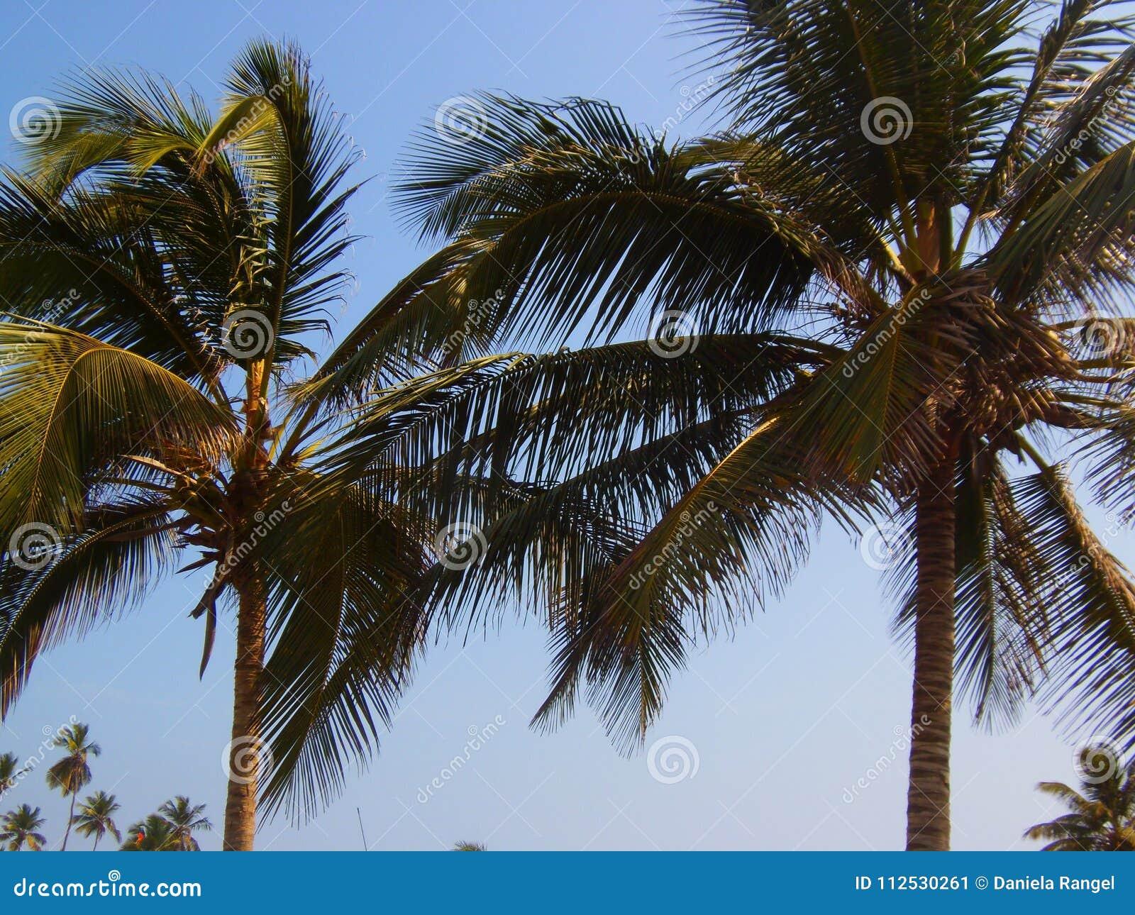 Drömlika soliga dagar på stranden