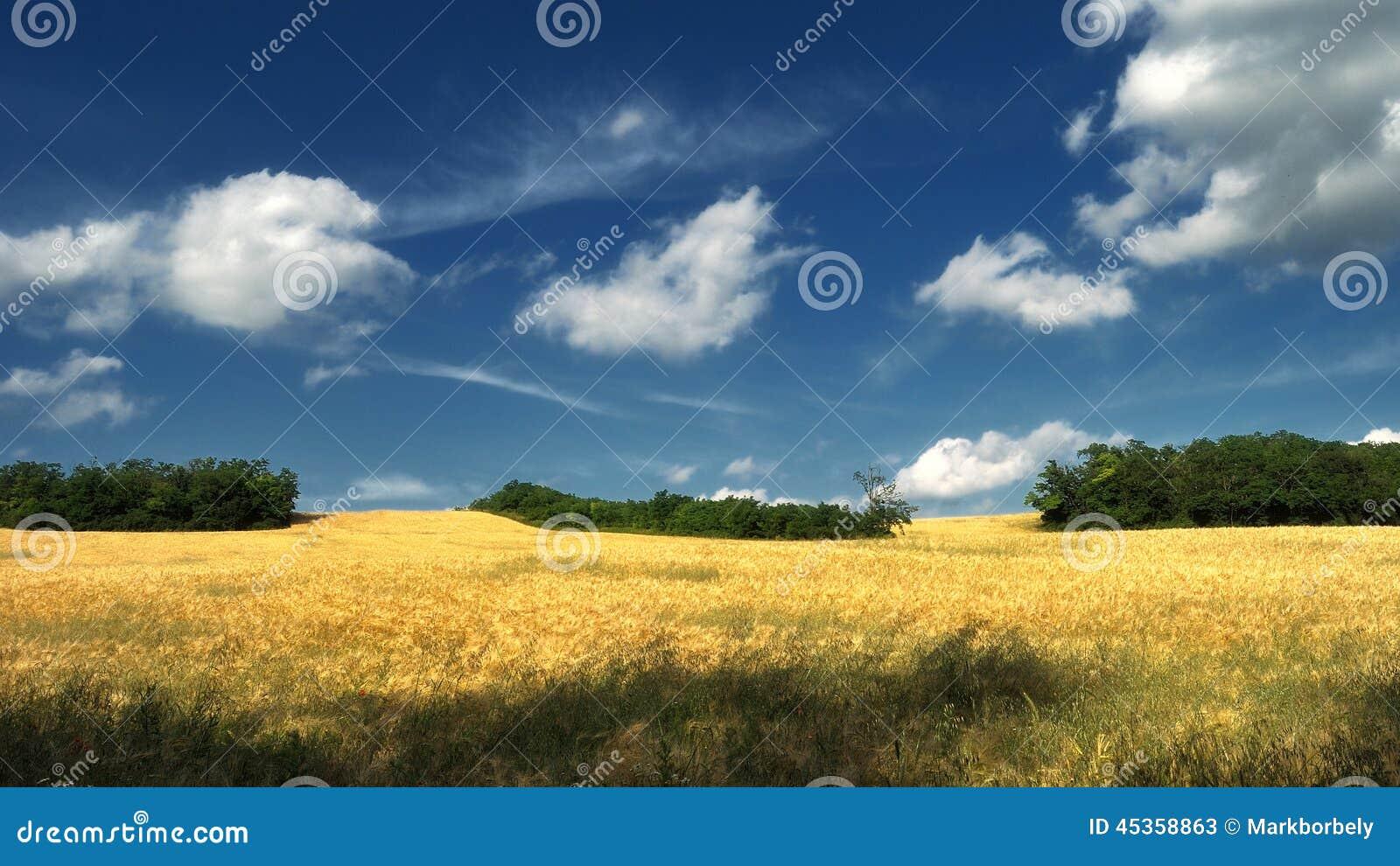Drömlikt vetefält med träd och moln