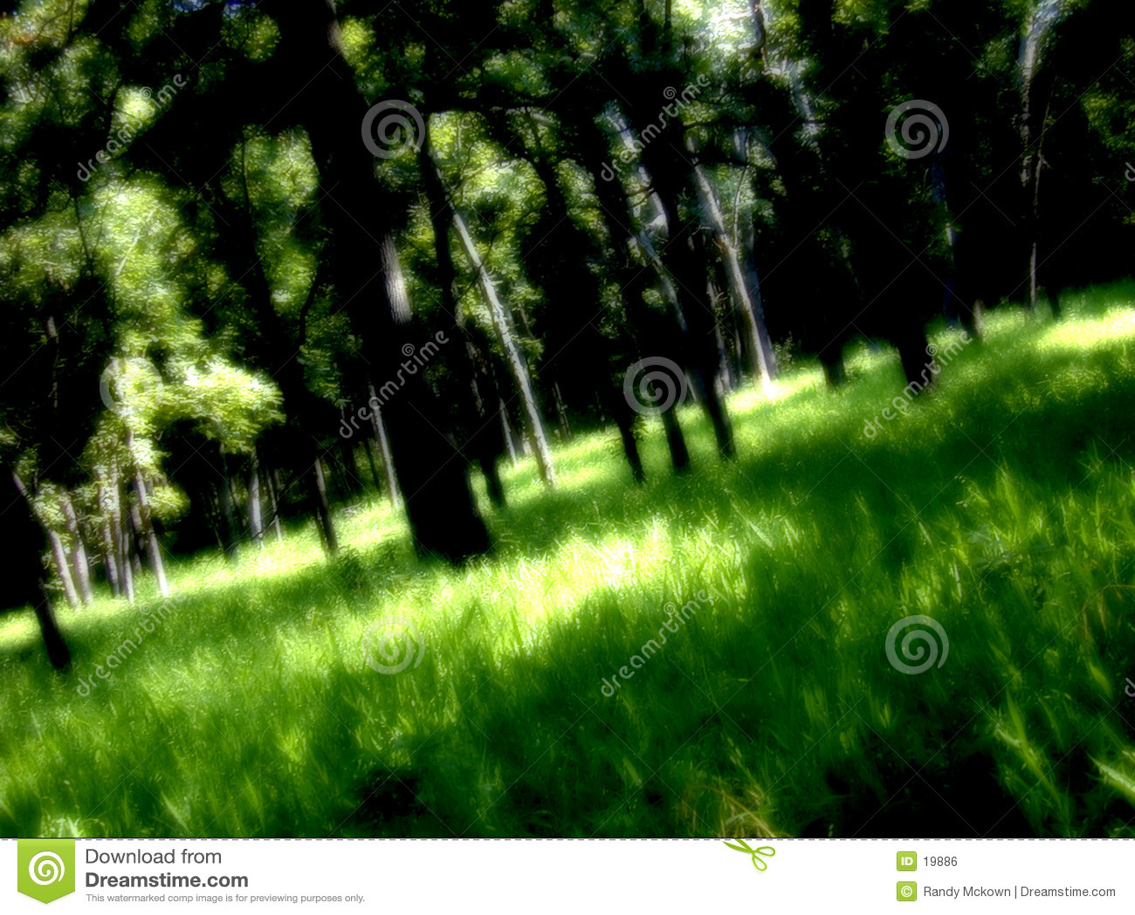 Drömm skogen