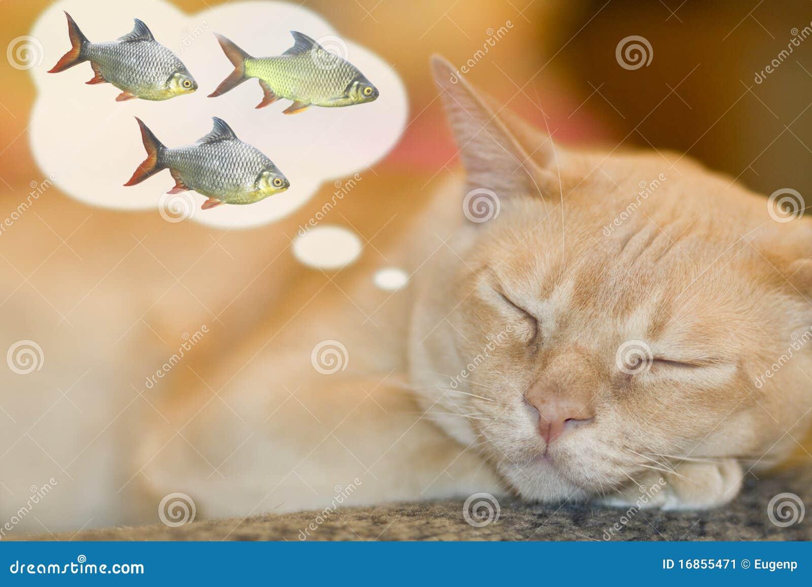 Drömma för katt