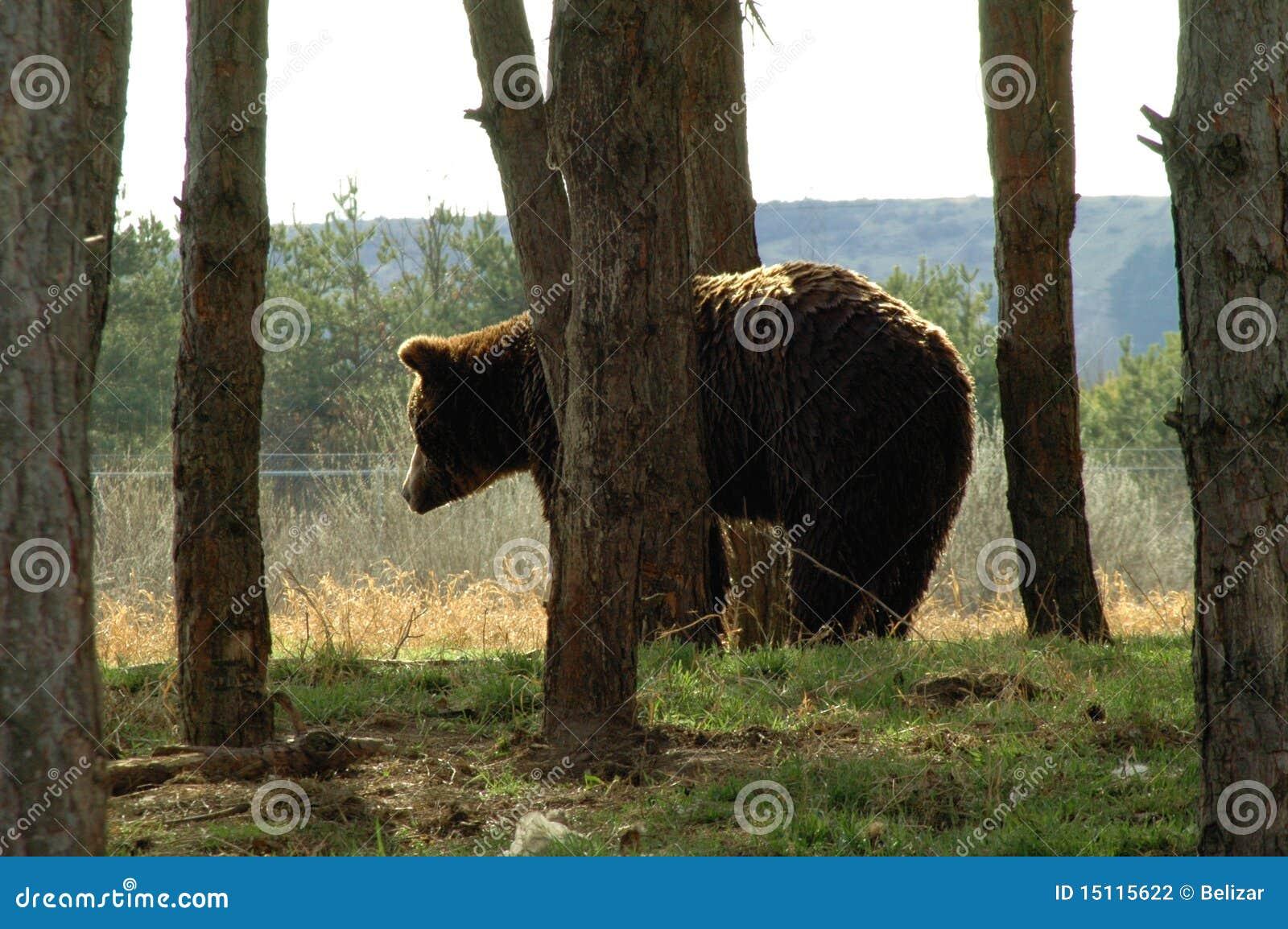 Draag in de rand van bos