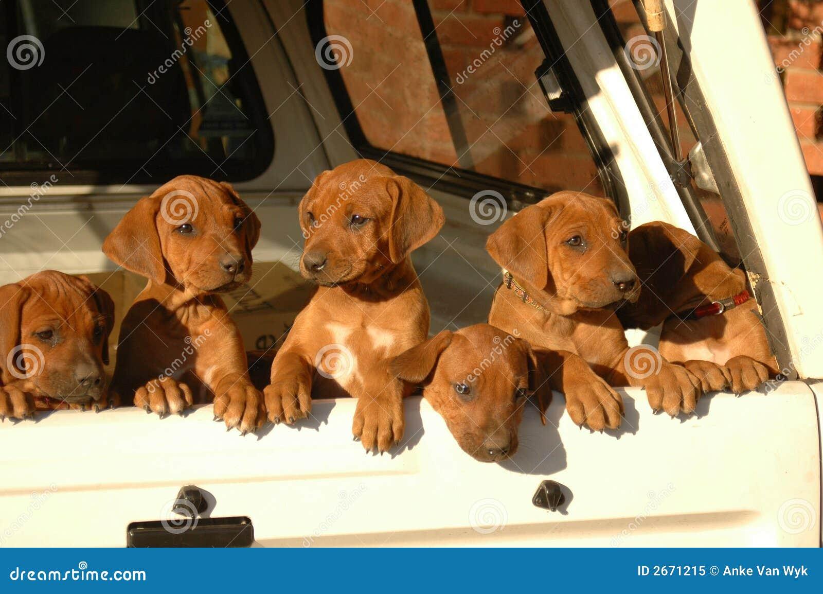 Draagstoel van puppy