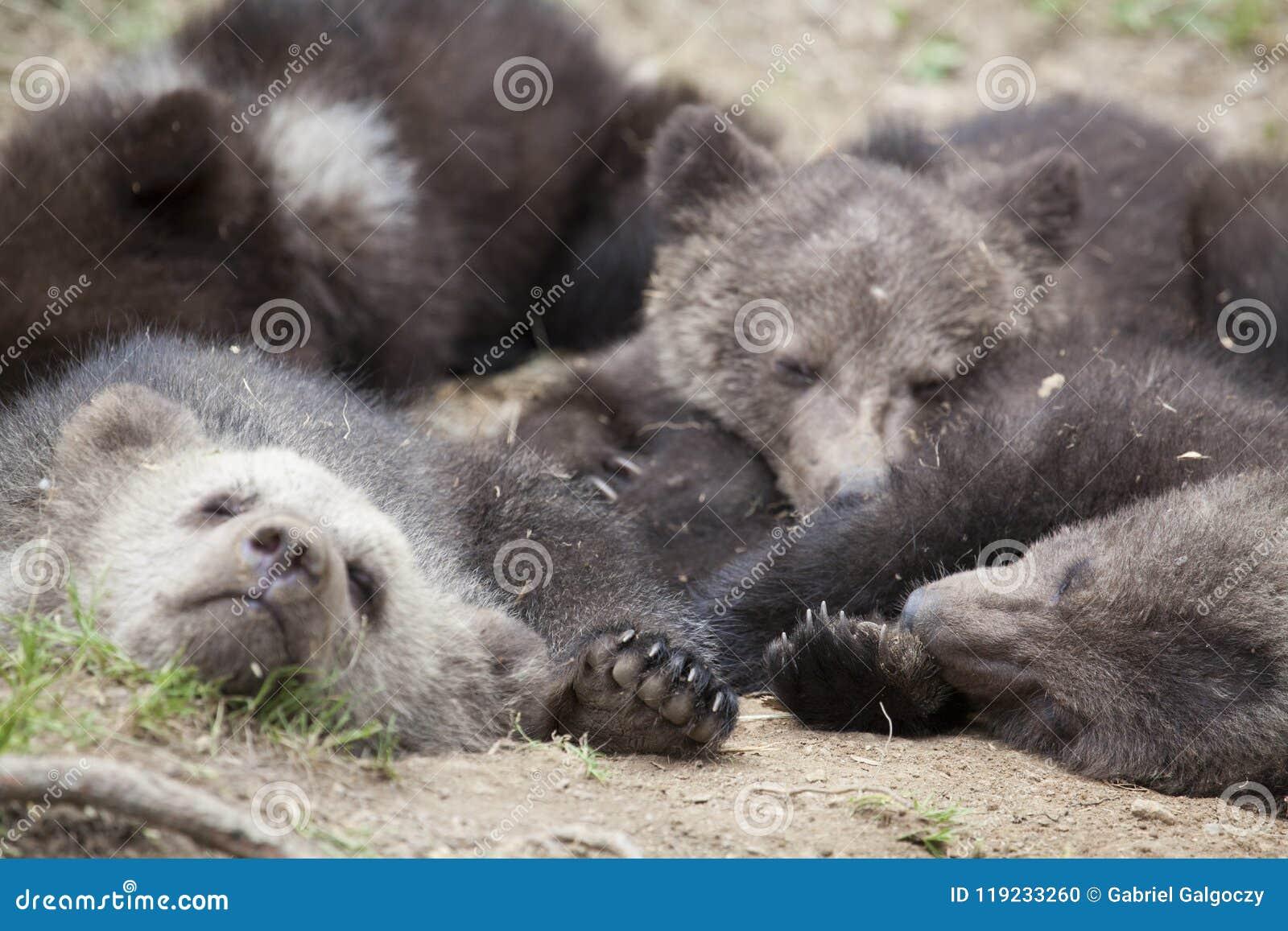 Slapen Op Grond : Draagt al samen het slapen op grond stock foto afbeelding