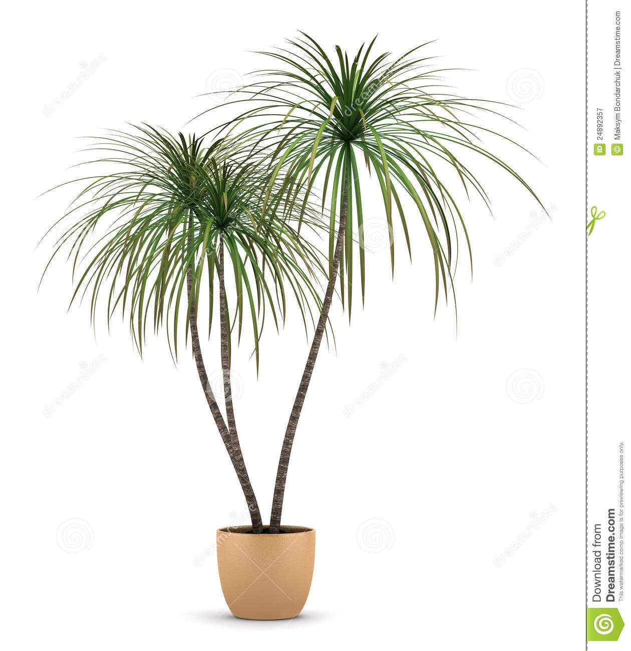 Beautiful Black Brown And White Living Room #10: Dracaena-plant-pot-isolated-white-24892357.jpg
