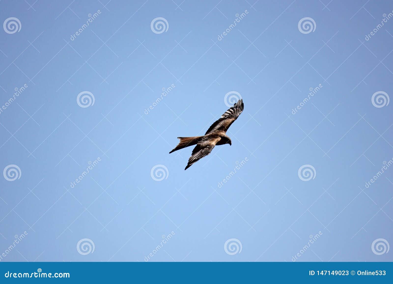Drachen, der oben in den Himmel fliegt