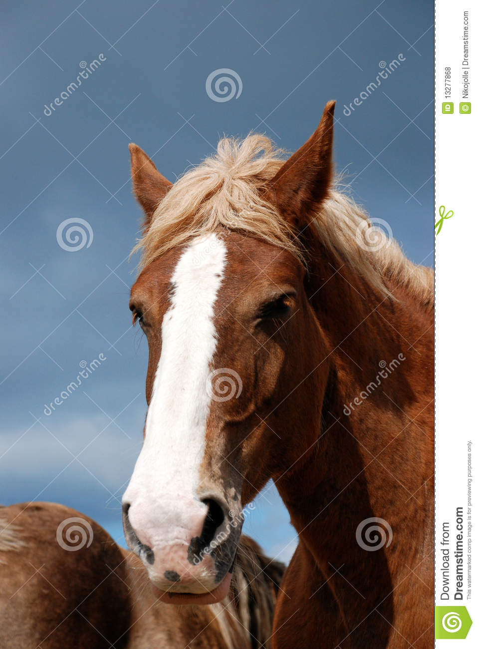 4 329 Draft Horse Photos Free Royalty Free Stock Photos From Dreamstime