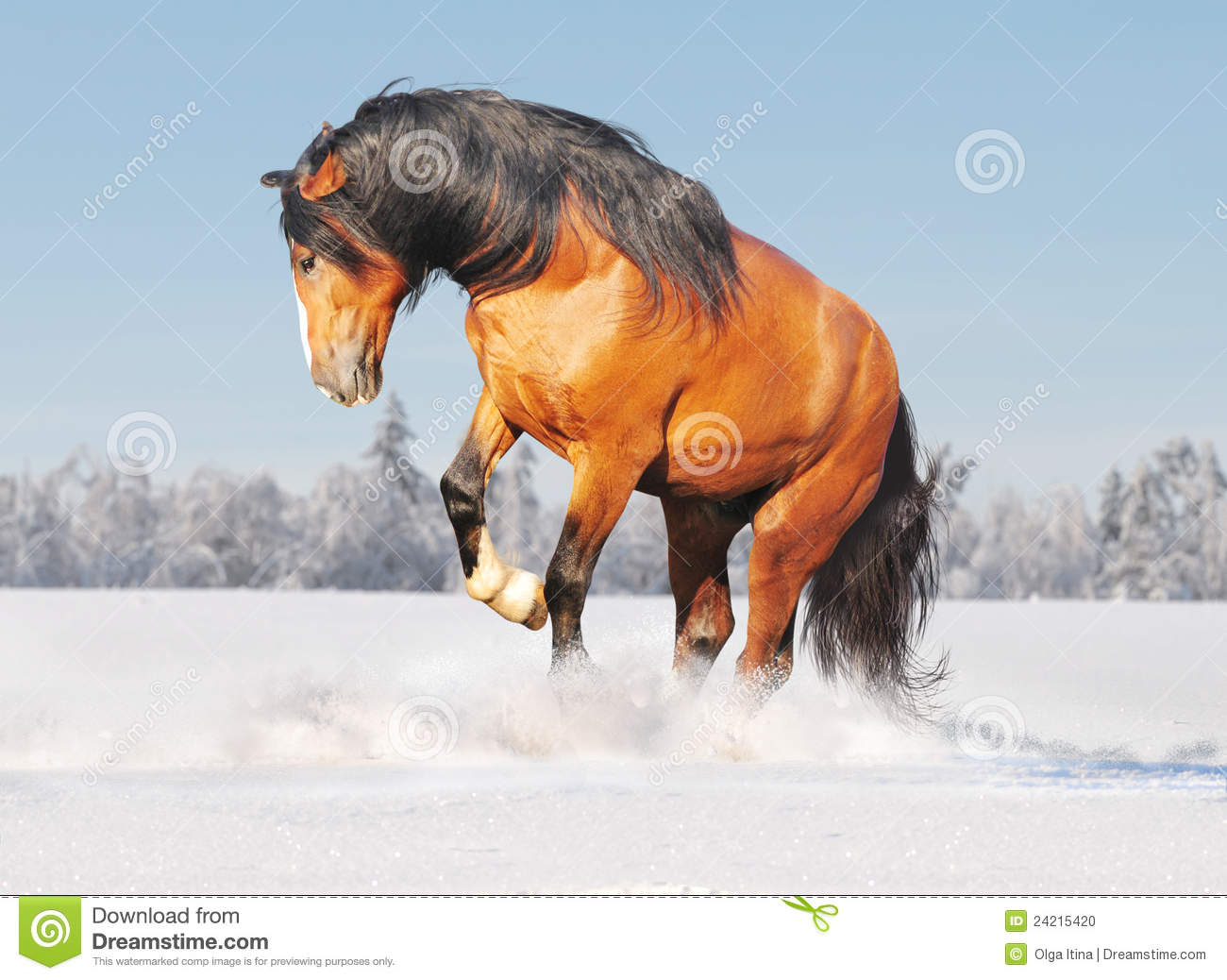 Draft Horse In Snow Stock Photo Image Of Chestnut Object 24215420