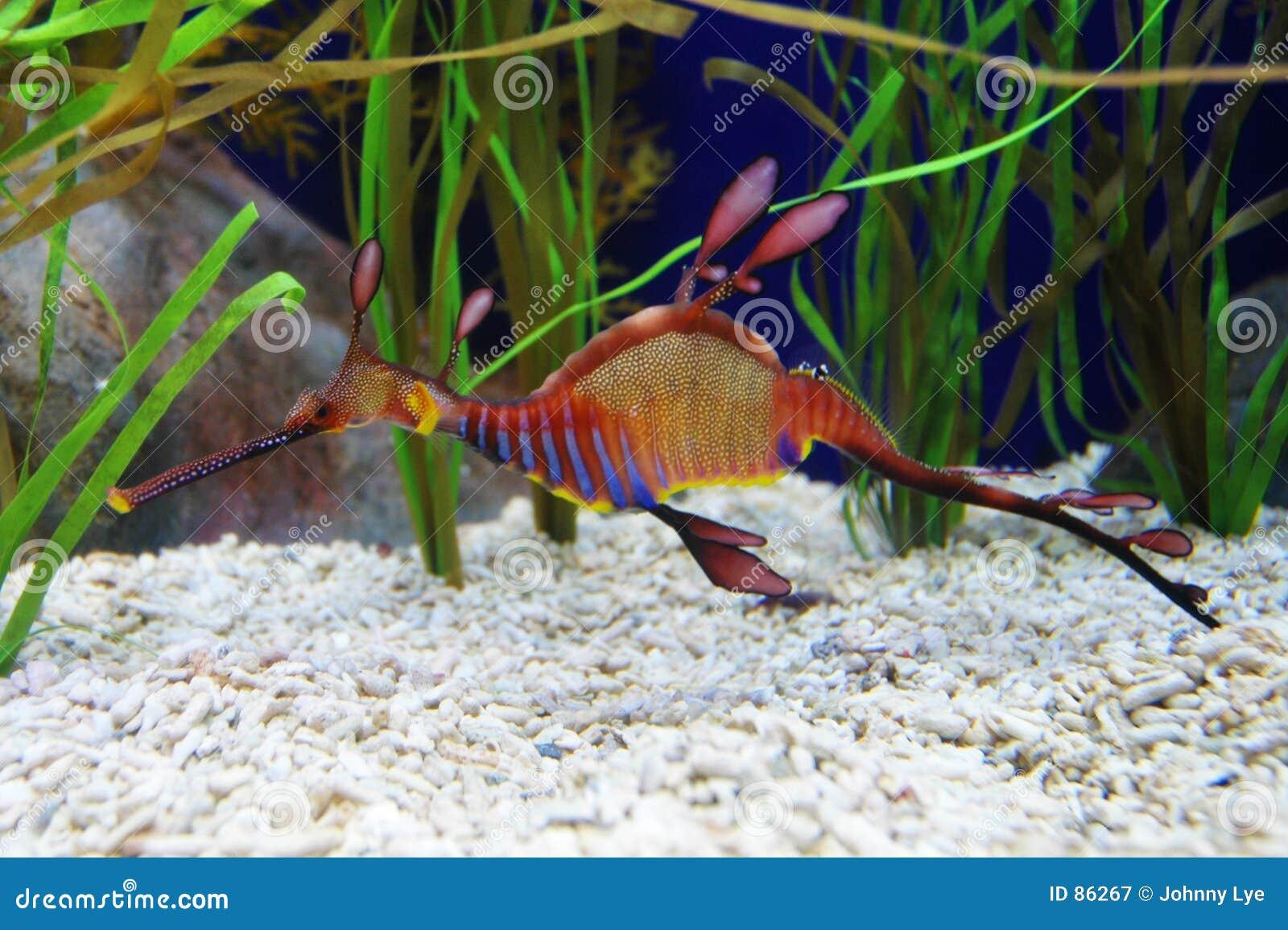 Dragão do mar