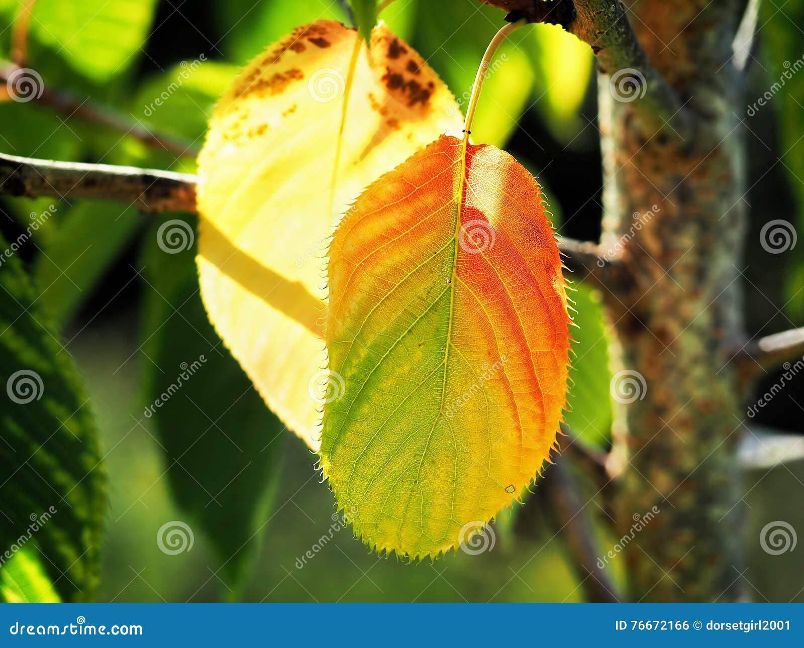 Dragningar av hösten