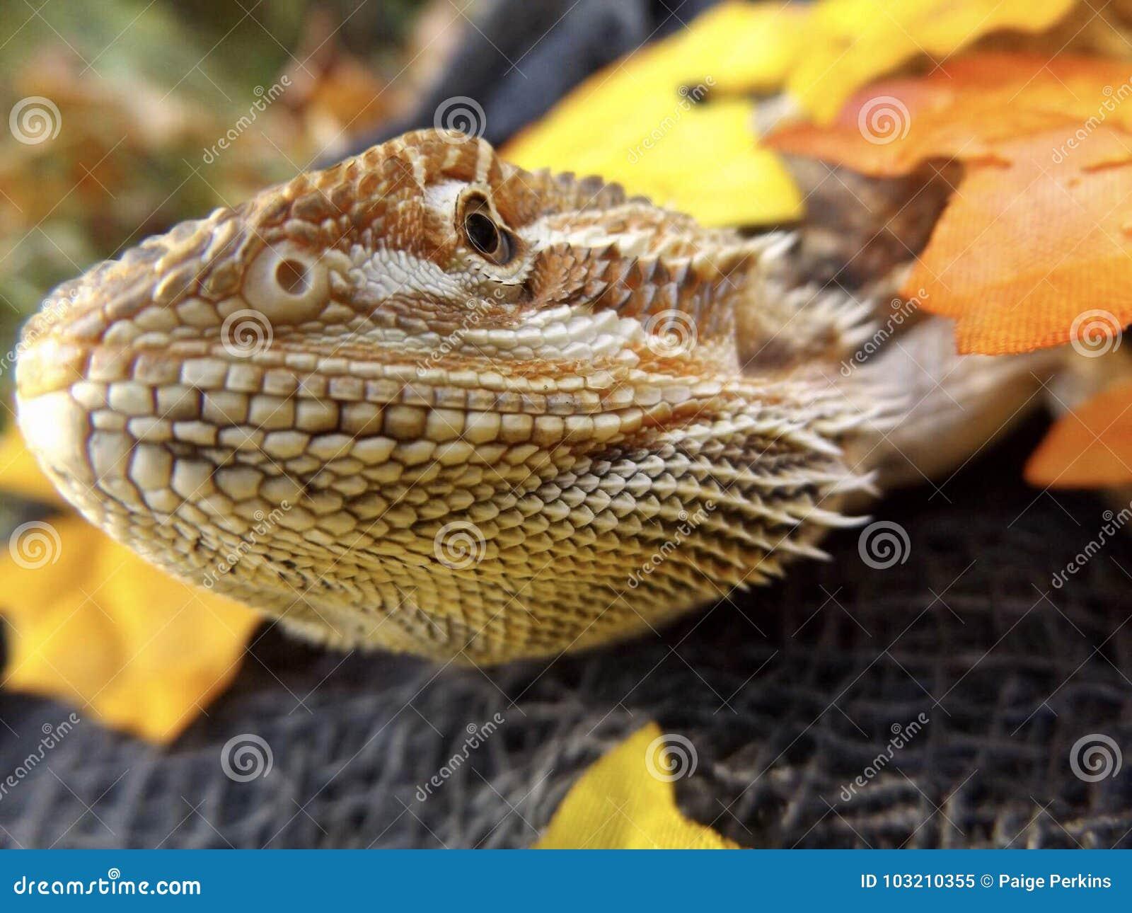 Dragon Enjoying Fall