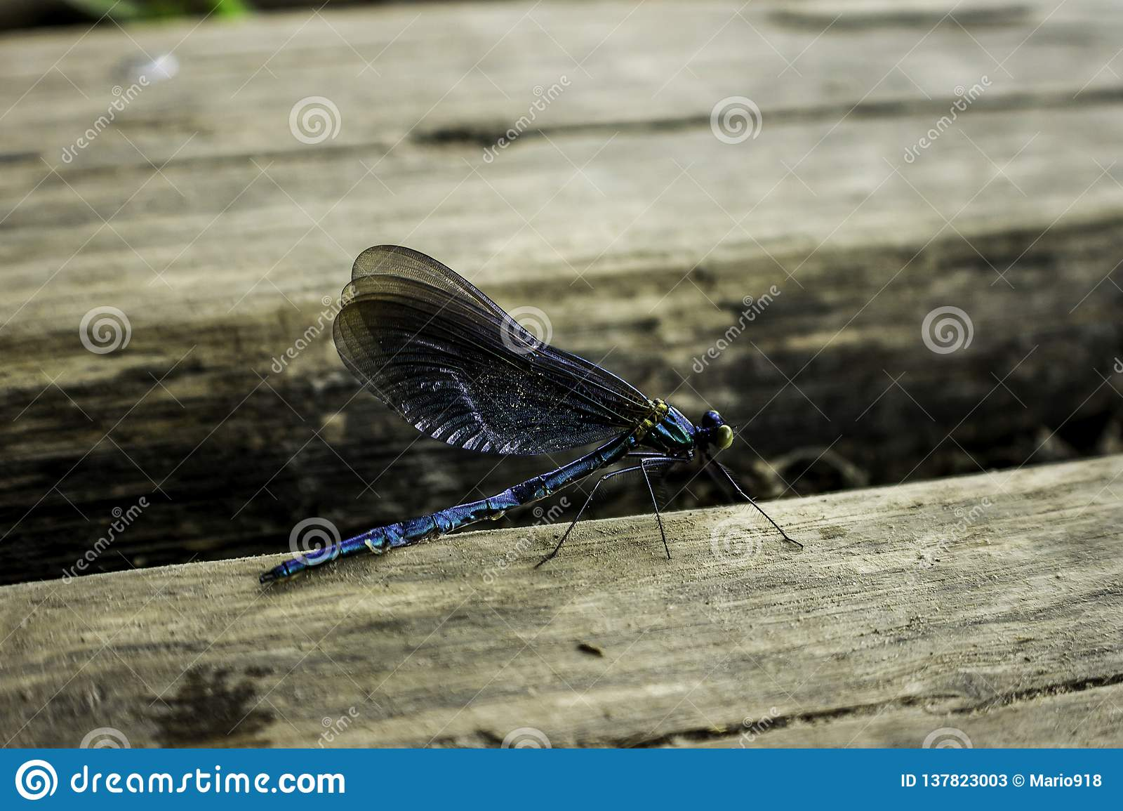 Dragon Fly i Plitvice, Kroatien