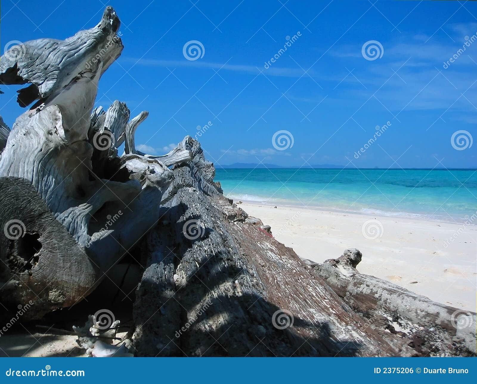 Dragon s sunbathe in Paradise