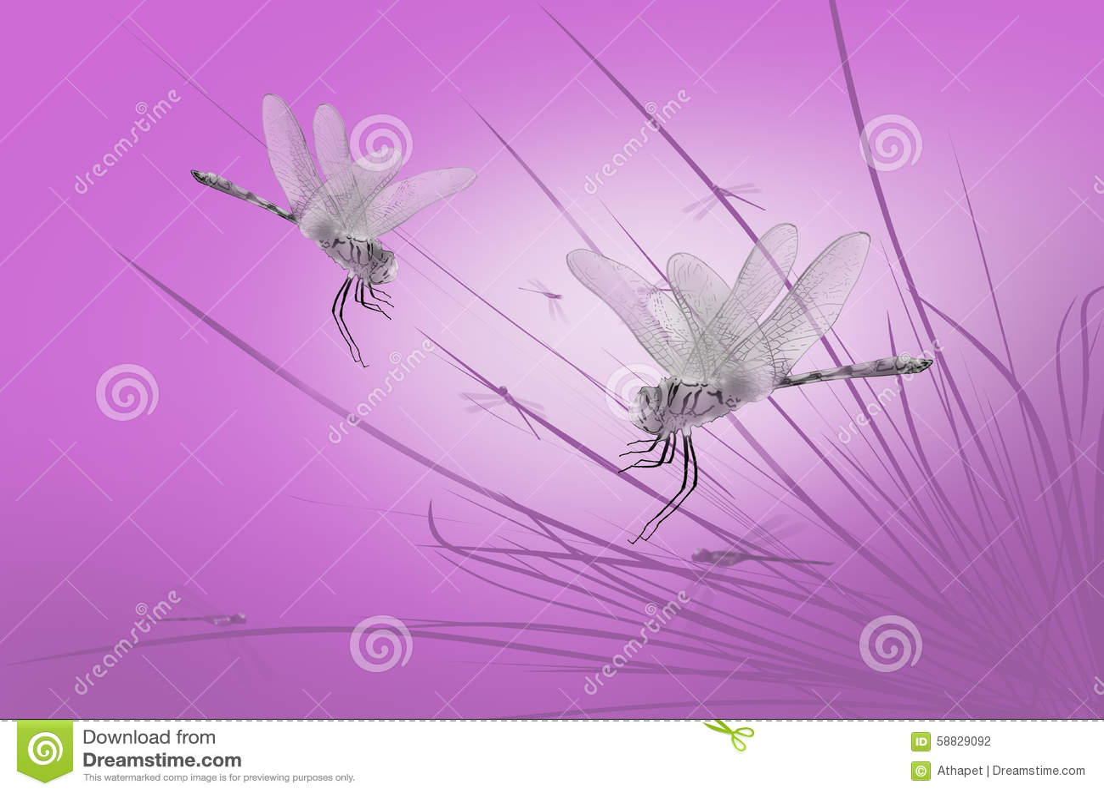 Dragonflies na trawie