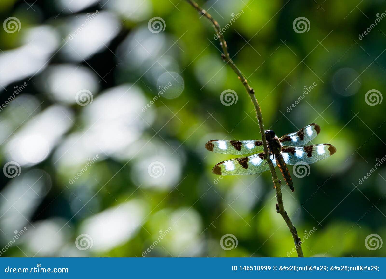 Dragonfly's skrzydła szczegół z ciekawym tłem