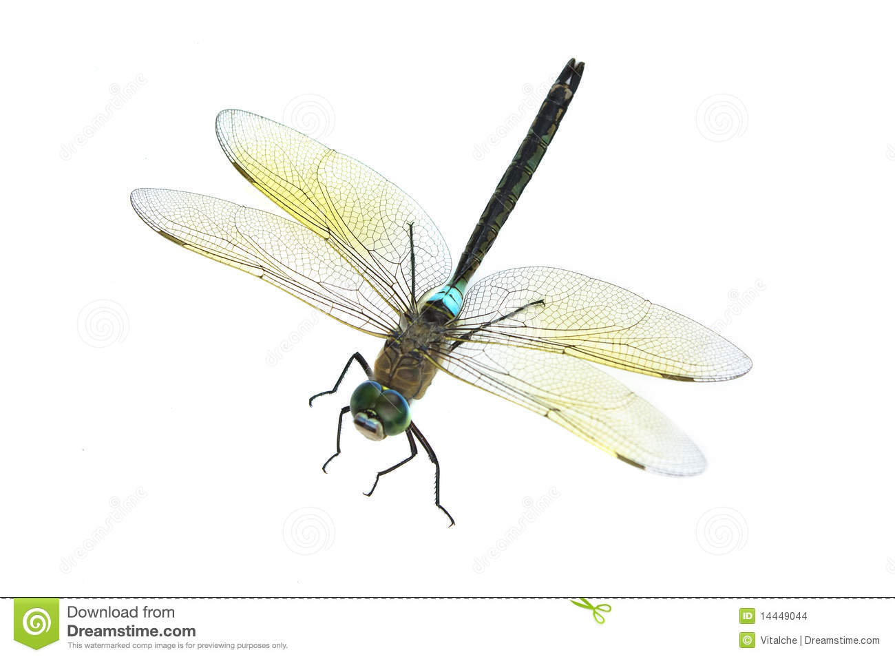 Dragonfly on an isolated white background.