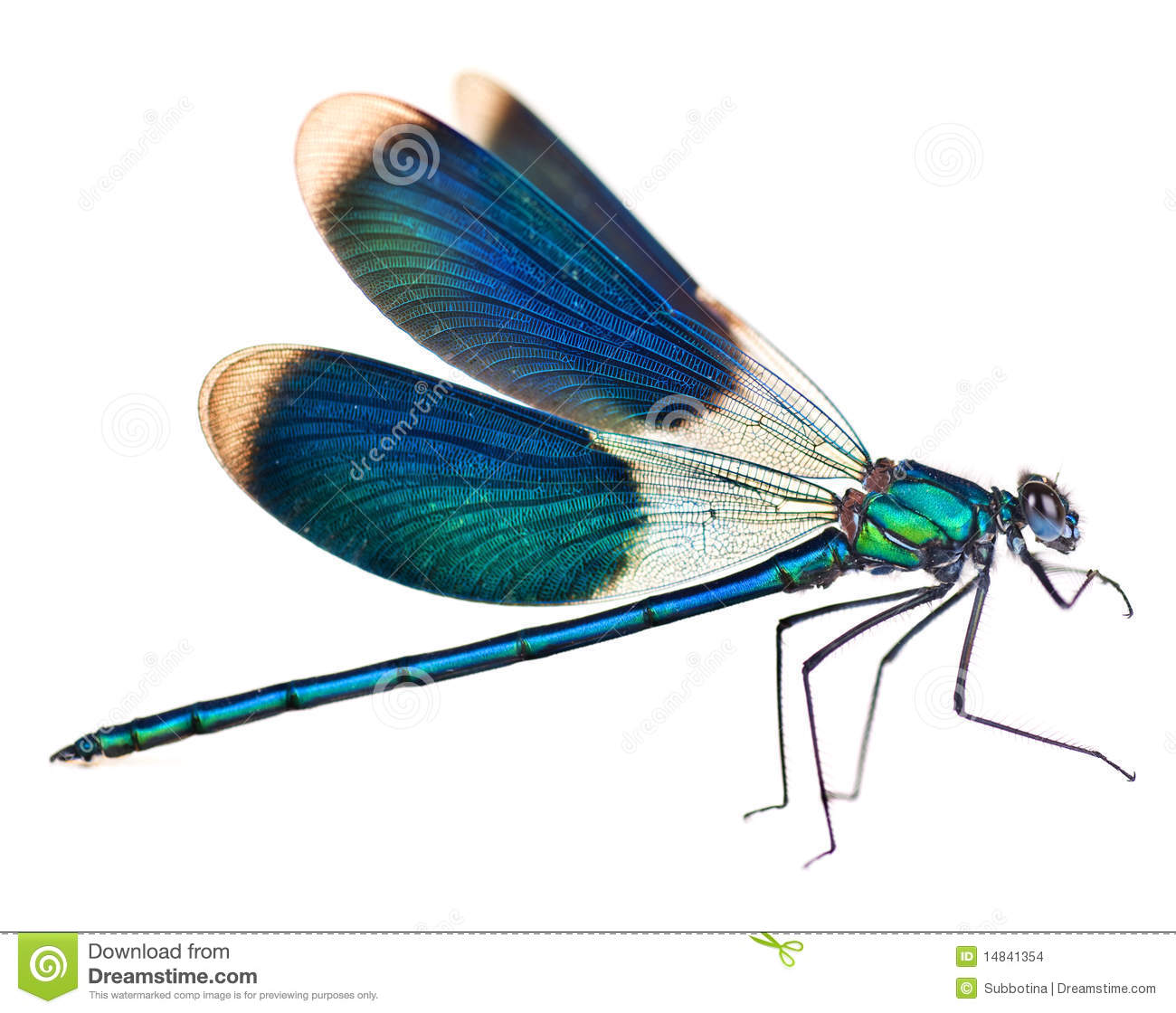 Dragonfly Stock Photo Image Of Color Beauty Body Real 14841354