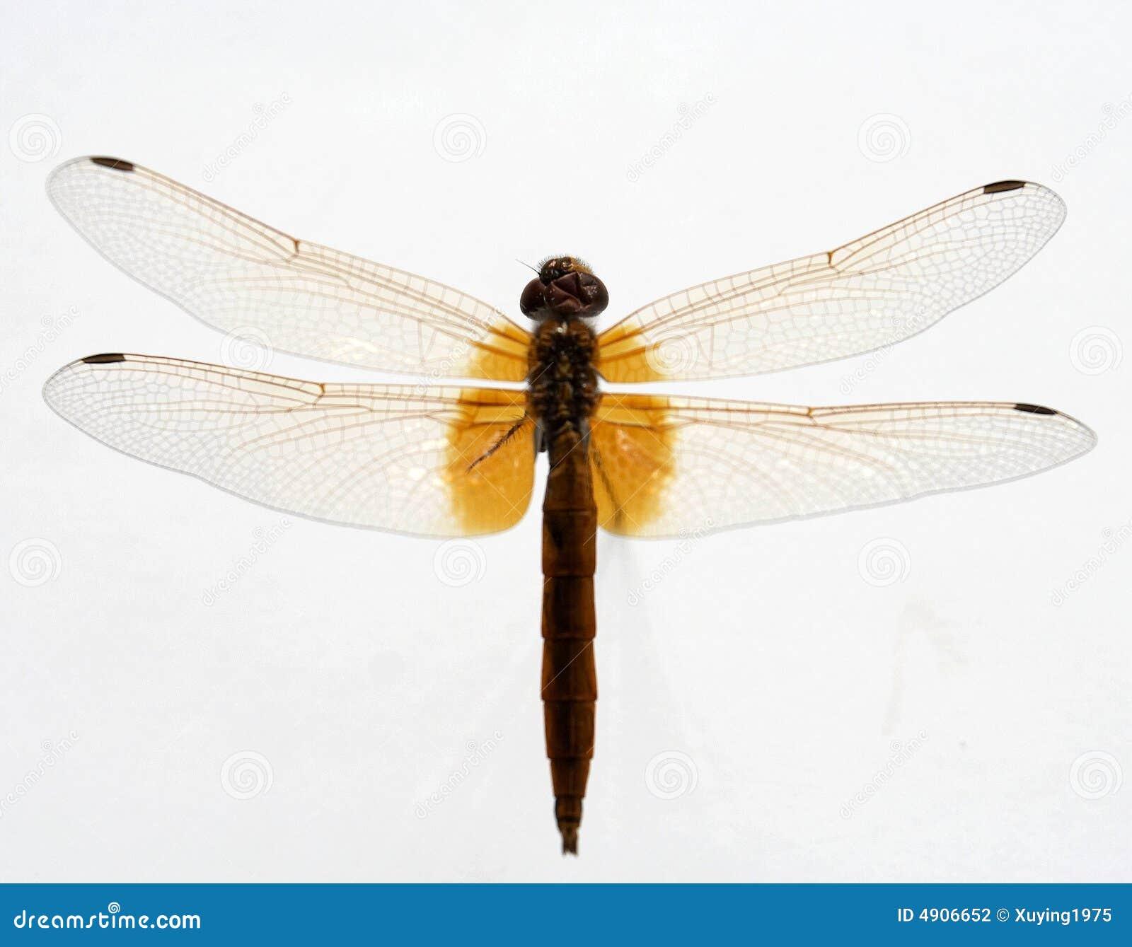 Various - Order Odonata Vol. 5