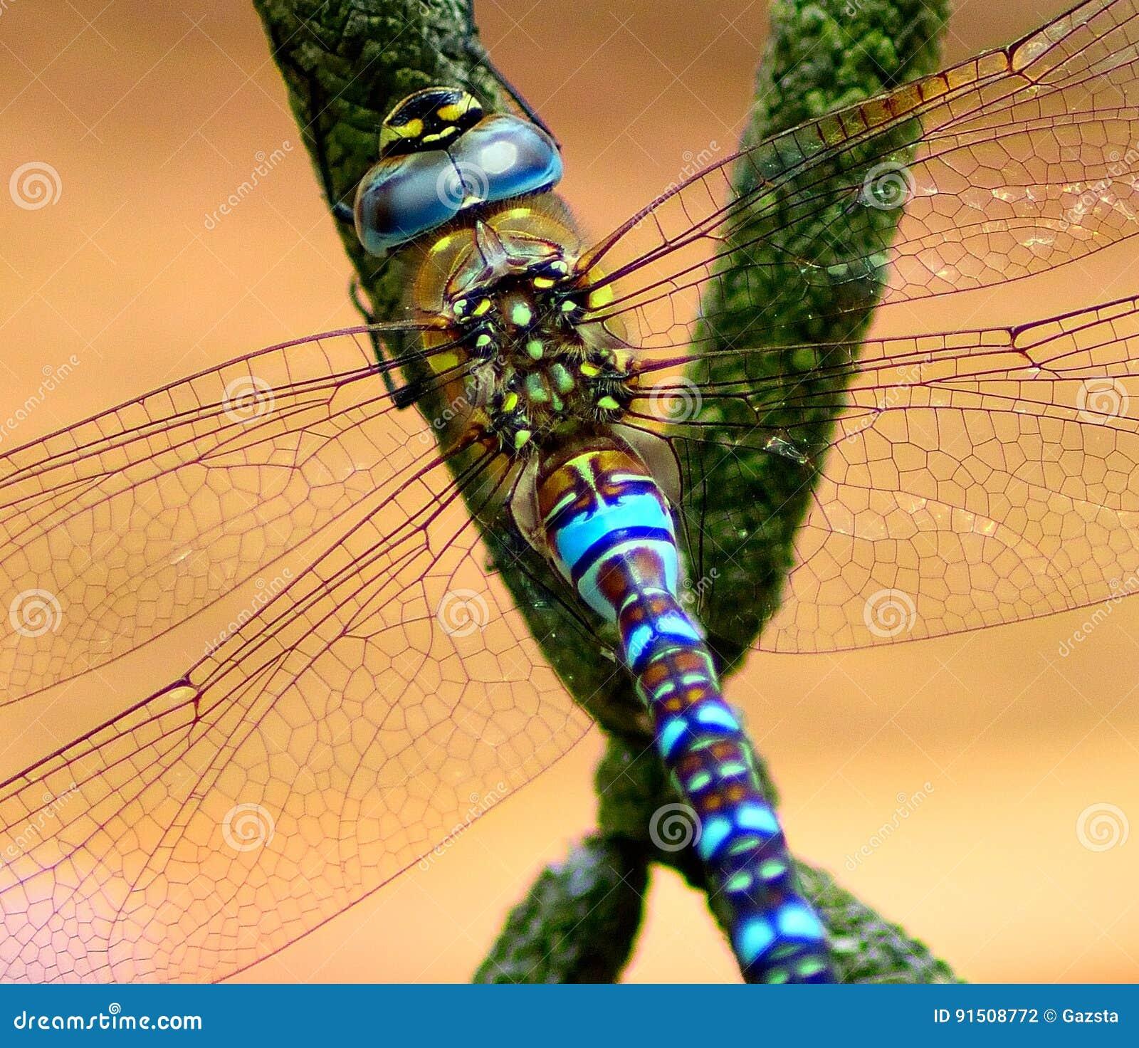 Dragonfly basking in sun