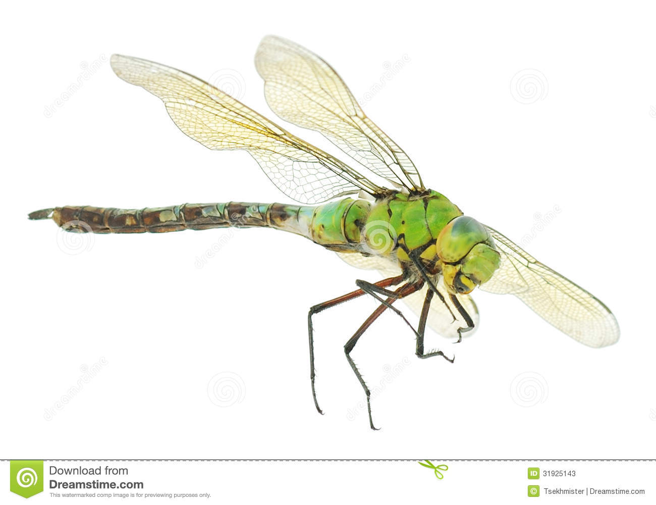 Closeup of big green dragonfly over white.