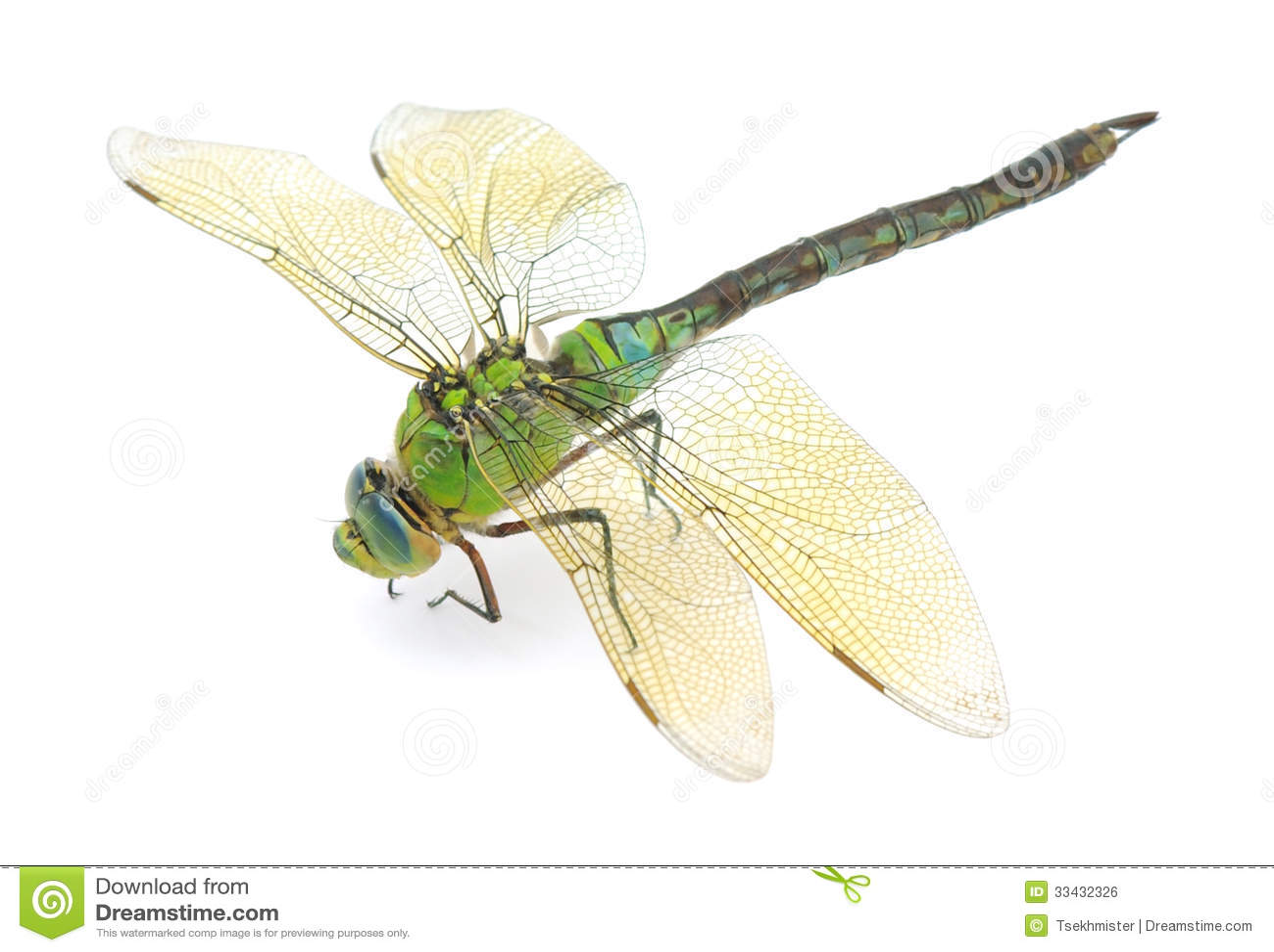Dragonfly Royalty Free Stock Image - Image: 33432326