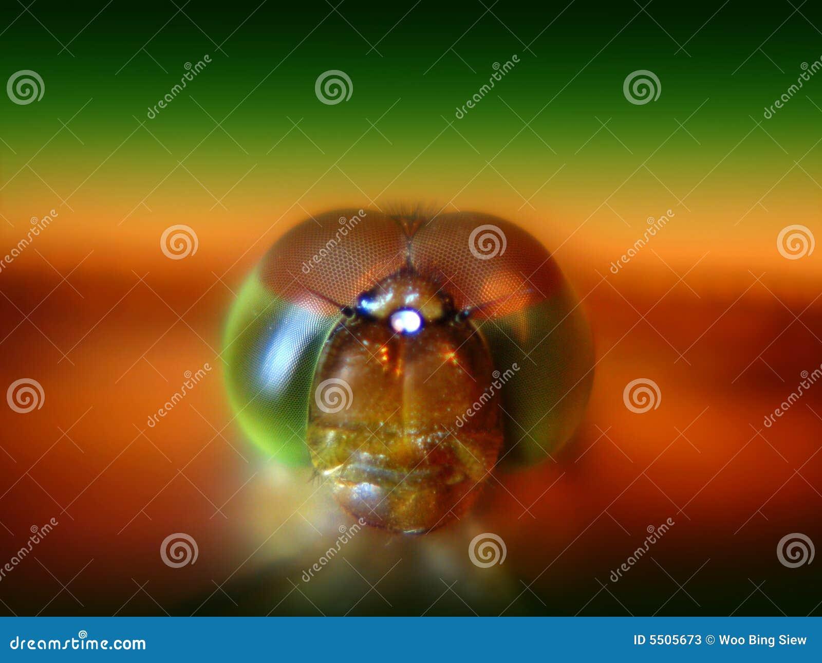 Dragonfly eyes s