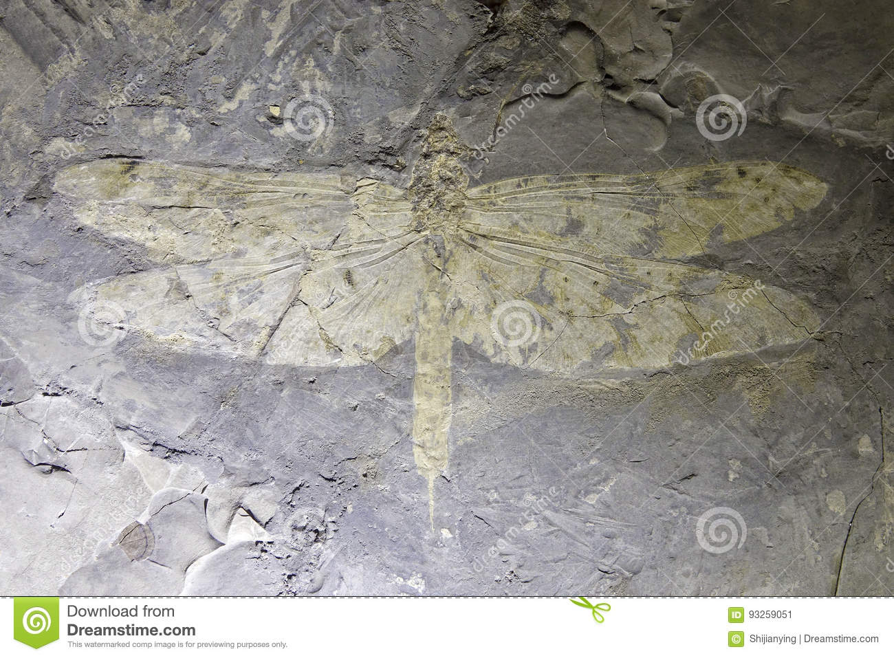 Download Dragonfly fossil stock image. Image of insect, fossils - 93259051