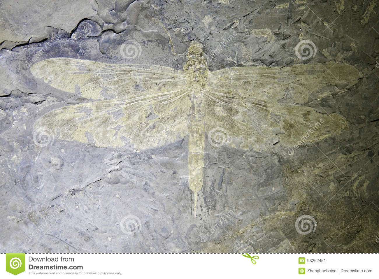 Download Dragonfly fossil stock image. Image of aeschnidium, ancient - 93262451