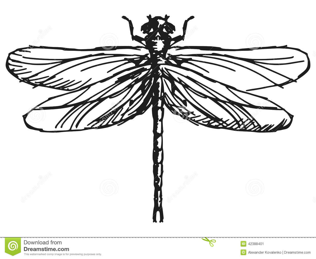 Hand drawn, sketch illustration of dragonfly.