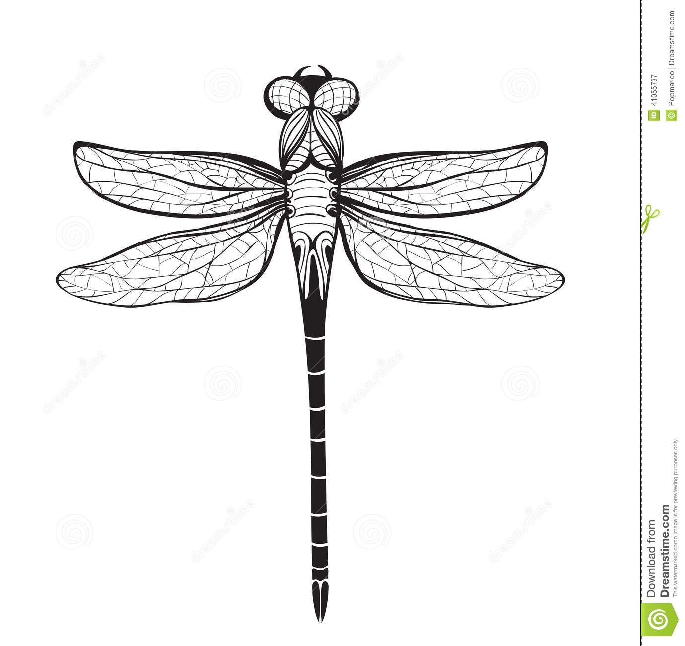 firefly insect flying drawing