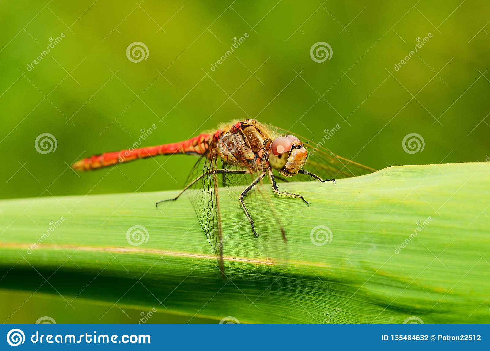 Dragonfly is an insect living near water bodies